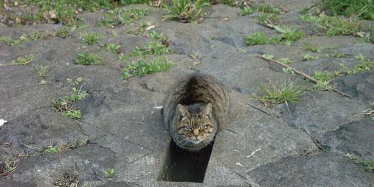 SOLAR-CAT.jpg