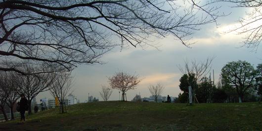 saigoyamasakura01.jpg